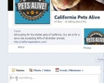 Getting started with social media for animal welfare
