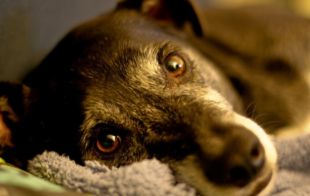 18 things my dogs have taught me (about life and dogs)