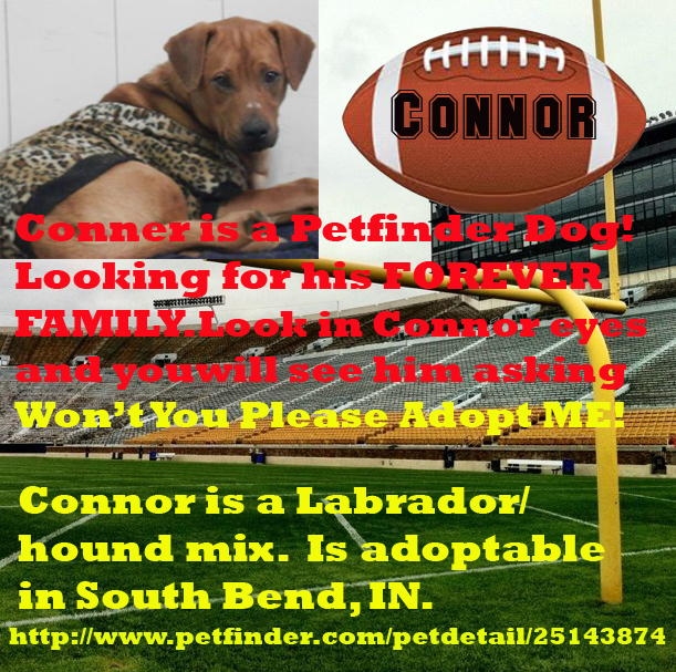 Connor Super Dog Sunday: adoptable dogs in South Bend, IN