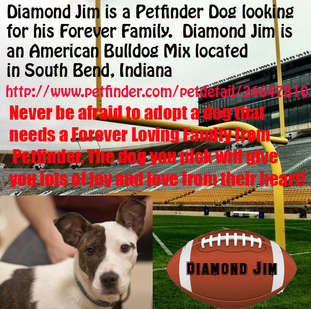 Diamond Jim needs a forever home. He is in South Bend, IN.