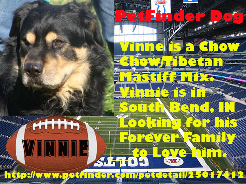 Vinne Super Dog Sunday: adoptable dogs in South Bend, IN
