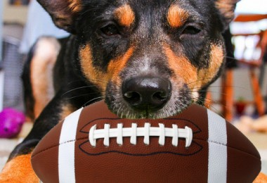 Super Dog Sunday: Submit a photo of your sporty dog