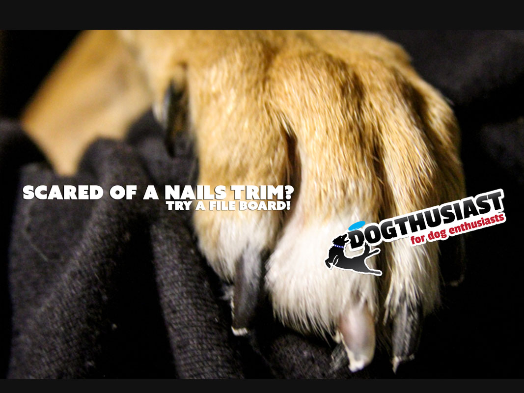 Training Tips Tuesday: Dog scared of nail trims? Train your dog to ...