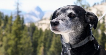 Mikey dog in Yosemite