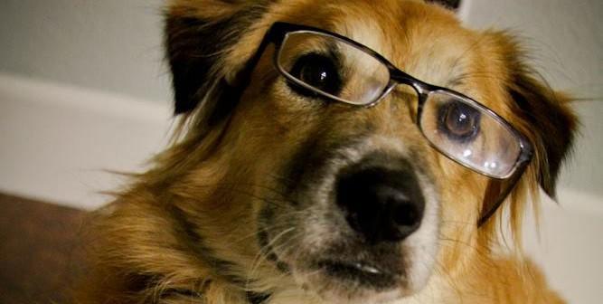 She is a smart dog.