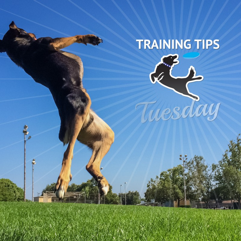 Training Deal Dogs