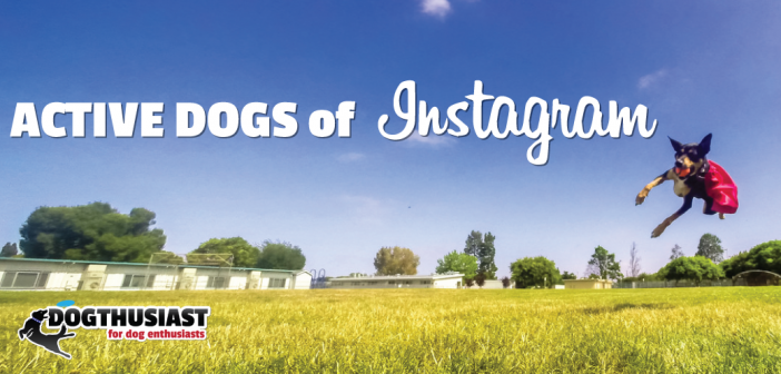active-dogs-of-instagram1-702x336 A dog blog for active dogs