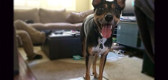 Dog Training Tips For Barking