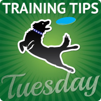 Training Tip Tuesday blog hop about dog training and behavior and dog tricks