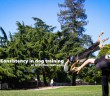 Dog jumping over a human