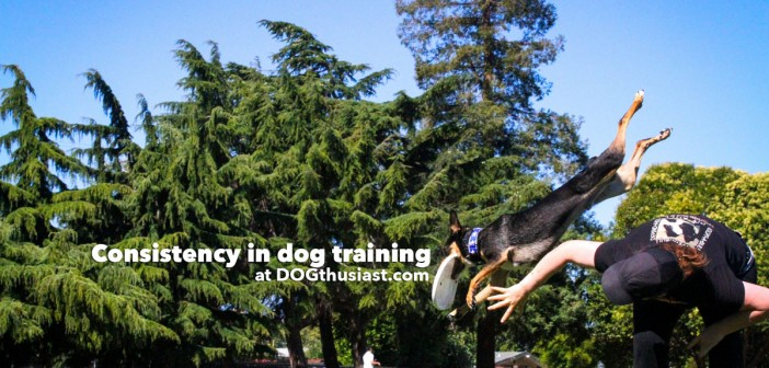 How being consistent can help train our dogs