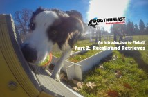 Introduction to Flyball series part 2