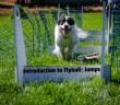 Introduction to Flyball - dog jumping over flyball jumps