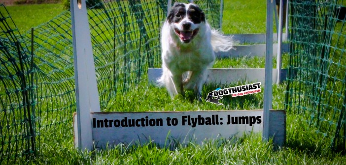 An Introduction to Flyball: Learning Jumps. Training Tips Tuesday