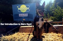 We tried barn hunt!