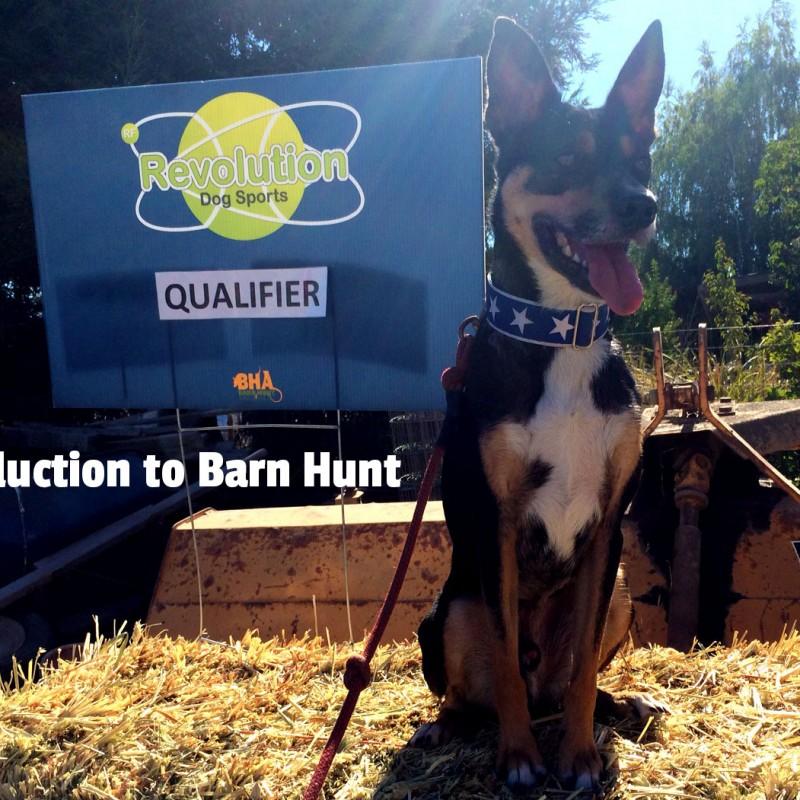 Dog Training Barn South Brent Devon