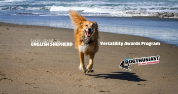 Learn about the English Shepherd Versatility Awards Program