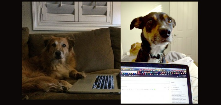 Why I write about dogs