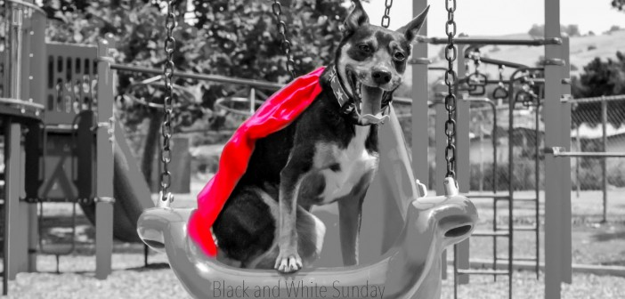 Mort in a bucket swing for Black and White Sunday