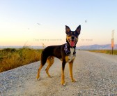 Dog training essentials for when you travel with dogs