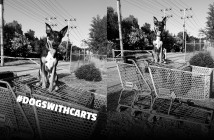 dogswithcarts