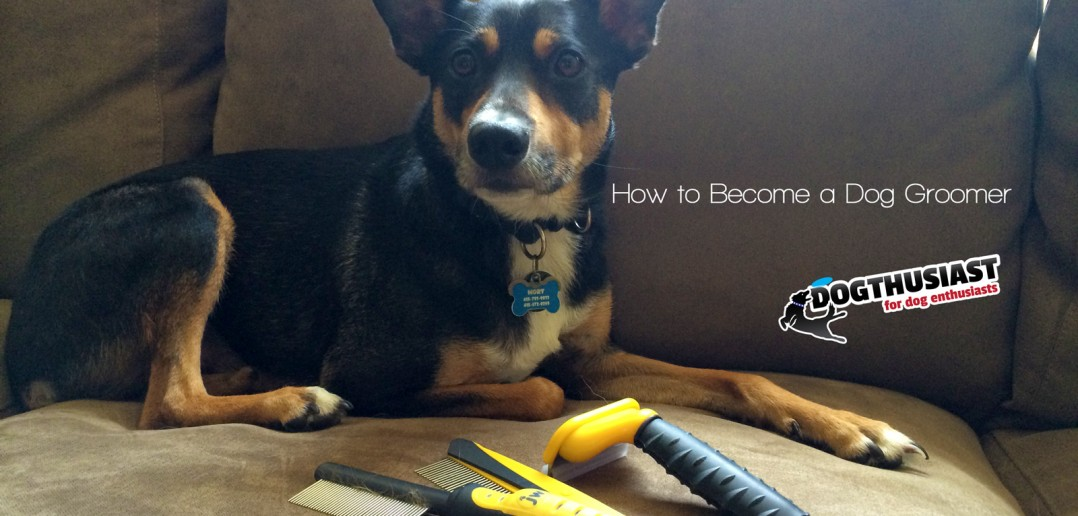 how to become the alpha to your dog