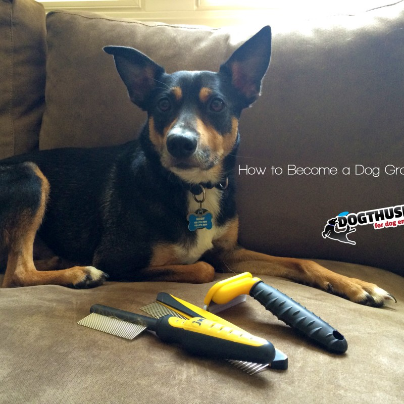 Best Dog Groomer In Chattanooga