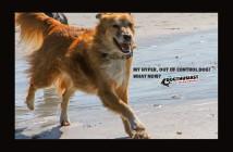 My dog is hyper! Please help!