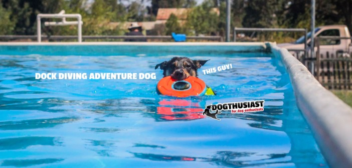 Dock Diving makes Adventure Dog Mort a happy dog #AdventureDogChat