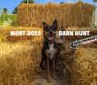 barnhunt-adventure
