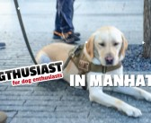 Shake Shack and Working Memorial Dogs in Manhattan #DOGthusiastNY #BetterWithPets