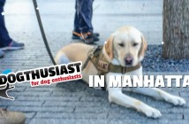 DOGthusiast-in-Manhattan-featurepart3