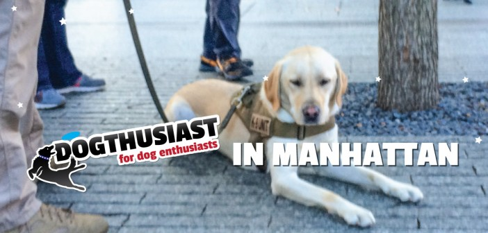 DOGthusiast-in-Manhattan-featurepart3