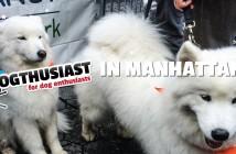 Dogthusiast in Manhattan for My Dog Loves Central Park Fair