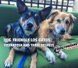 dog-friendly-losgatos-featured-110x96 A dog blog for active dogs