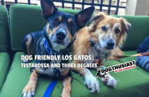 Dogs at Dog Friendly Los Gatos restaurants