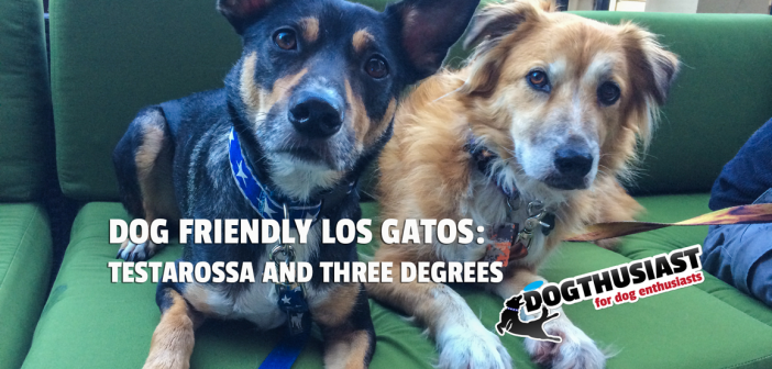 Dog Friendly Los Gatos: Stopping by Testarossa and Three Degrees for #AdventureDogChat