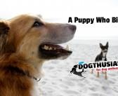 My Golden Retriever puppy keeps biting me: what do I do? #FridayForums