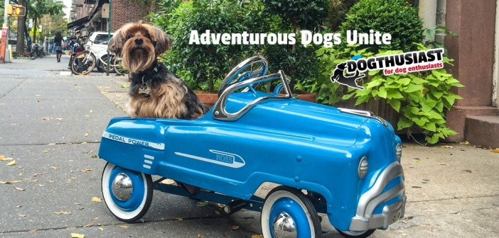An Adventurous Dog in a Car (it's not what you think): For #AdventureDogChat