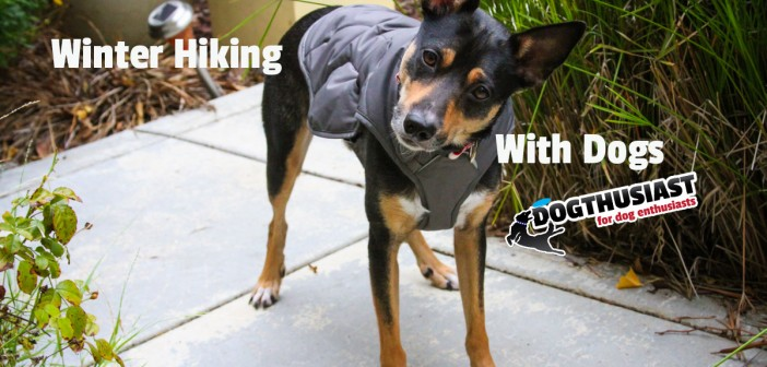 Winter hiking with dogs: Functional, quality finds to keep active dogs warm and stylish