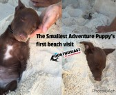 What happens when you take an adventure puppy to the beach for the first time? The cutest thing you ever saw (And announcing the 2014 Holiday Guide!)