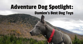 Adventure Dog Spotlight: Mark from Damien's Best Dog Toys