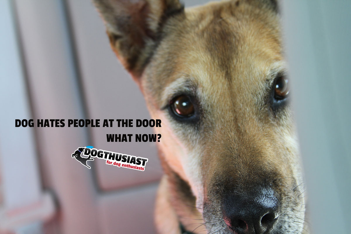 Dog Behavior Questions Dog Hates People Coming To Our House What