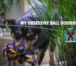 mortreport-damien-featured-110x96 A dog blog for active dogs