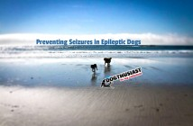 Preventing Seizures Epileptic dogs article