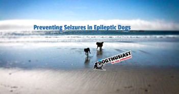 Preventing Seizures in Epileptic Dogs
