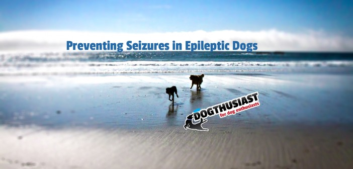 preventing-seisures-featured-702x336 A dog blog for active dogs