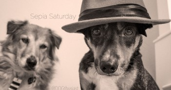spud-in-hat-featured-351x185 A dog blog for active dogs