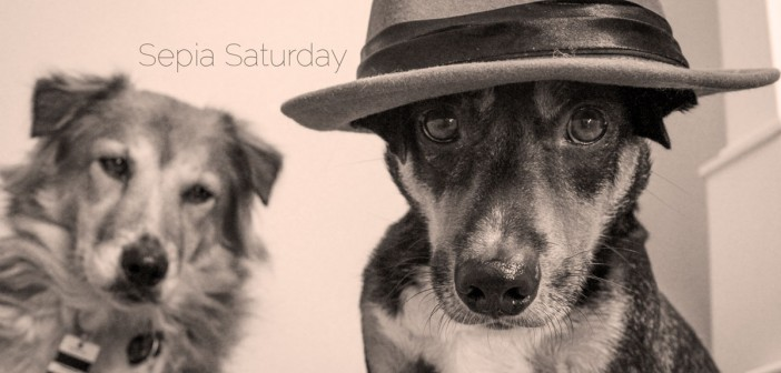 A dog in a hat: using a prop in your dog photo