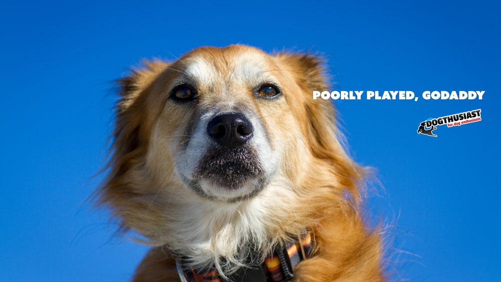 Stop Dog Barking Device Reviews Uk
